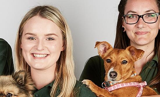 All3 Media International licences The Dog House to Australia and acquires Dog Almighty
